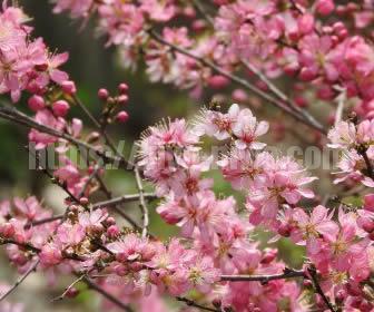 和風テイストな庭を彩る梅の木