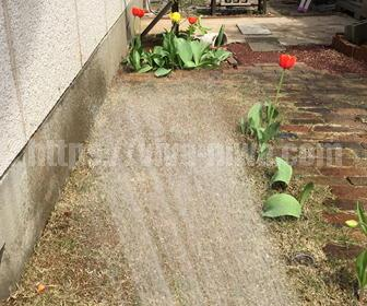 芝生の目土の水まく