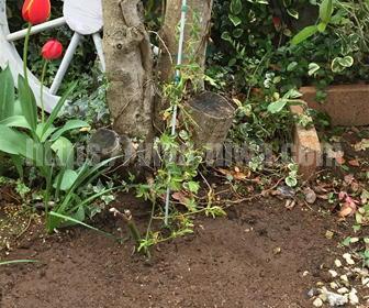 バラの植え方の施工事例