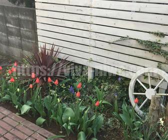 チューリップを使って庭をデザインする