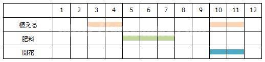 ブルーセージの育て方の工程表