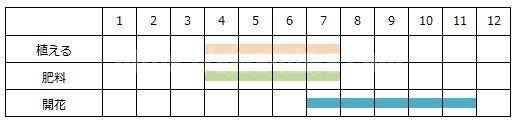 ルドベキアの育て方の工程表
