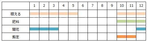 クリスマスローズの育て方の年間スケジュール表