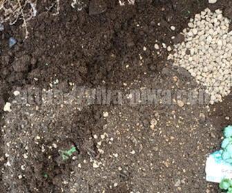 地植えの土の作り方