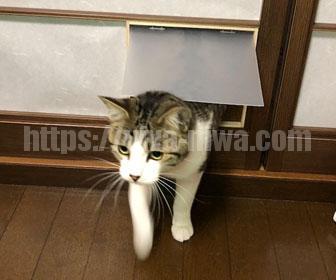手作りのキャットドアで猫がくぐる