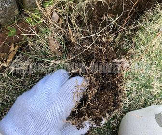 芝生のエッジ処理