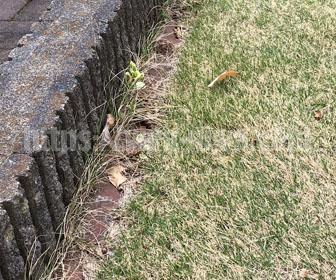 芝生の荒れた見切り