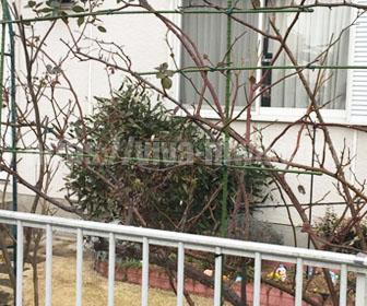 バラのフェンスの組み立て完了