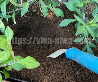 花壇の土の入れ替え作業