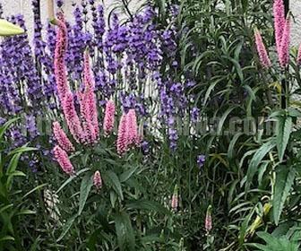 花壇の作り方の多年草を使う